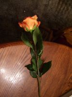 orange rose 2 by turtledove-stock