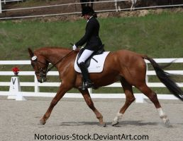 Dressage 025 by Notorious-Stock