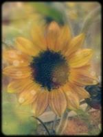 Sunflower by Sunflower0302