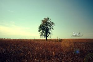 Lonely by kop4