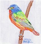 Painted Bunting by stargate4ever23