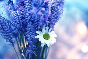 blue flowers by pinyty
