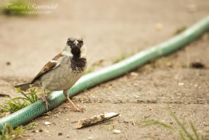 King of the garden hose by TammyPhotography