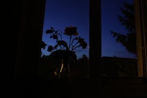Flowers by the window by duleantovi