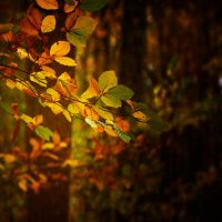 Light-lifted leaves by ensilencio