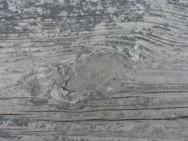 Wood Texture 7 by Ox3ArtStock