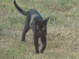 My Little Panther by CutePetLover