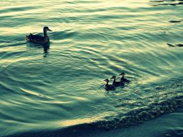 Mother duck and Ducklings by OlkaBolka1123