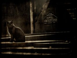 Cat on a graveyard by realdarkwave