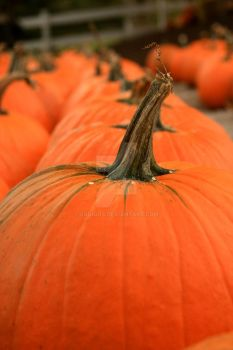 Row of Pumpkins by squiggs