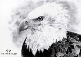 Eagle by CupStudio