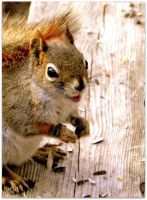 A Happy Squirrel by JocelyneR