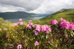 Trossachs Flora by FlippinPhil
