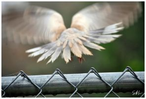 Fly Away by Momenti-Photo