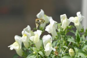 Bee Bug Hover Over by Miss-Tbones