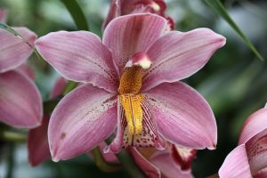 Orchid Foundation XI by Azagh