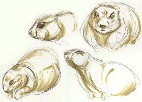 Zoo drawing: Prarie Dogs by GoblinQueeen