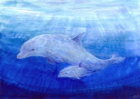 The Dolphin Calf by Liris-san