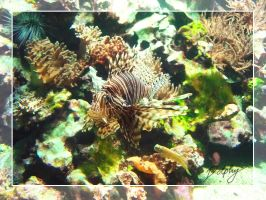 Red Lionfish by DolphyDolphiana