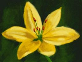 Yellow Lily by Nethilia