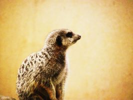 Lonely Meerkat by Raaarrrrw