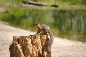 Squirrel 70 by Silver-she-wolf-14