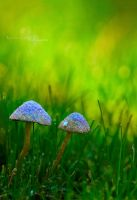 . Fairy Rings and Pixie Dust . by KimberleePhotography