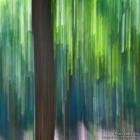 Floresta Abstracta by too-much4you