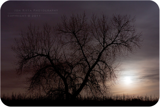 .: Silhouette in Moonlight :. by jon-rista