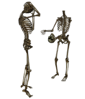 Skeleton - Head Trade - PNG by markopolio-stock