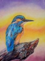 Kingfisher in the sunset by SugarandSpiceFlower
