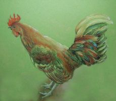 Rooster Pastel Sketch by johannachambers