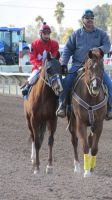 Racehorse Stock 62 by Rejects-Stock