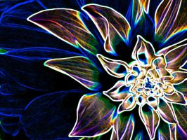 4D flower by ThEiUfO