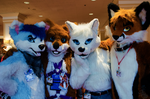 Group of Canine by ImagebyAllie