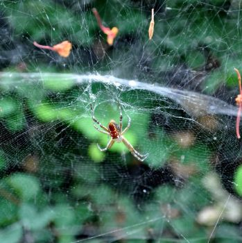 Life on the Web by nbdy-hr