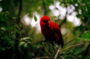 Red Feathers by paintedfingers