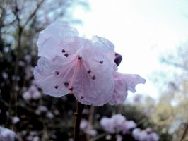 delicate flower 2 by TomBydand