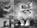 black and white cats 1 by nomonaxnaruto