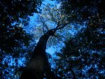 A tree II by lowso