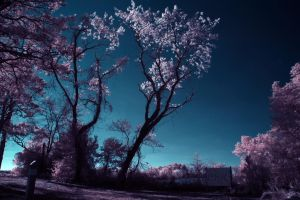 Leaning Tree Backlit IR by Enkased