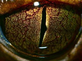 Tree Frog eye by DoctorPhrog