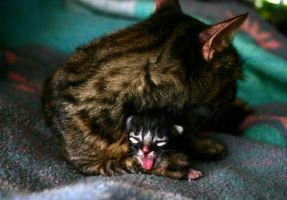 Baby Yawner by DreamEyce