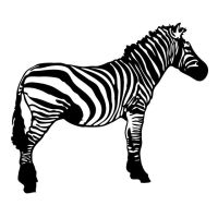 Zebra Vector Resource by pixelworlds