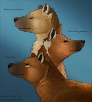 Dogs of South America by Eurwentala