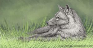 Wolf in the forest by Arri9873