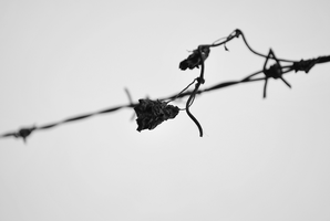 Life throughout it's path by Flamix
