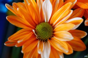 Birthday Flowers 3 by LifeThroughALens84