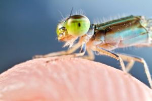 Damselfly rescue! by Zx30