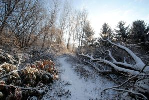 Fallen trees and snow by MNgreen